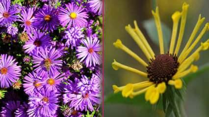Sonbahar mevsiminde ekilecek olan çiçekler nelerdir? Sonbaharda ekebileceğiniz 5 bitki