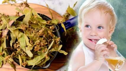 Bebeklere ıhlamur verilir mi? Ihlamur bebeklerde alerji yapar mı? Bebeklere ıhlamur tarifi