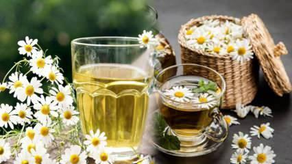 Papatya çayı aç mı tok mu içilir? Papatya çayı ile metabolizma hızlandırma