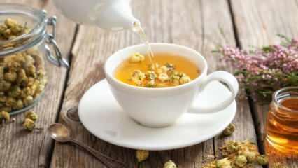 Papatya çayı nasıl kurutulur? Evde papatya çayı kurutmanın püf noktaları