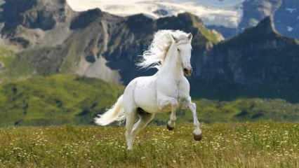 Rüyada beyaz at görmek neye işaret eder? Rüyada beyaz atın ölmesi ne demek?
