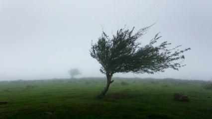 Rüyada fırtına görmek neye işaret? Rüyada kasırga çıkması nasıl yorumlanır?