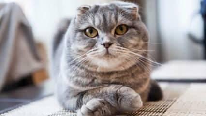 Evde yavru kedi nasıl beslenir? Evde kedi bakımı...