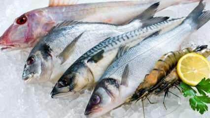 Balık nasıl saklanır? Dondurucuda balık saklamanın püf noktaları nelerdir