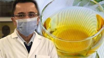 Virüse karşı mucize çay: Zeytin yaprağı çayının faydaları nedir? Zeytin yaprağı çayının yapımı