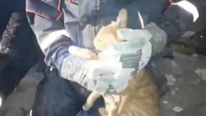 Depremde enkaz altında kalan kedi kurtarıldı
