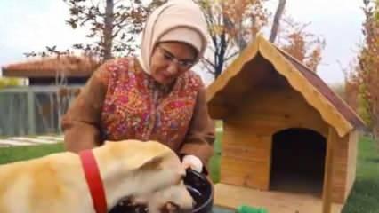 Emine Erdoğan'ın sahiplendiği 'Leblebi', Külliye bahçesinde