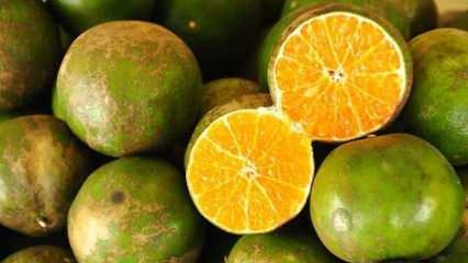 Uzmanların mevsim geçişlerinde tüketilmesini istediği: Yeşil mandalinanın faydaları nelerdir?