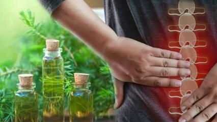 Kas ve kemik ağrılarına iyi gelen: Çay ağacı yağının faydaları nelerdir? Nerelerde kullanılır?