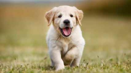 Rüyada köpek görmek neye işaret? Rüyada köpek saldırması görmek...