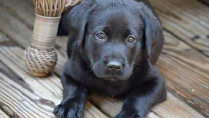 Rüyada siyah köpek görmek neye işaret? Rüyada siyah köpek saldırması görmek nasıl yorumlanır?