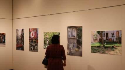 Tokyo'da 'Türk Kedisi' fotoğraf sergisi