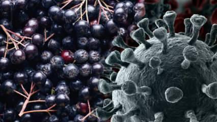 Bakteri ve virüsleri vücuttan atar! Aronya meyvesi faydaları nelerdir? Aronya nasıl yenir?