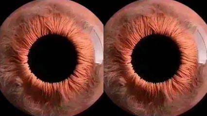 Mikroskopla bakıldığında gözün hareket şekli yakından görüntülendi!