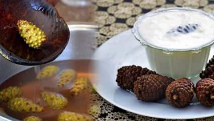 Çam kozalağı suyu nasıl tüketilir? Çam kozalağı yoğurdunun inanılmaz faydaları...