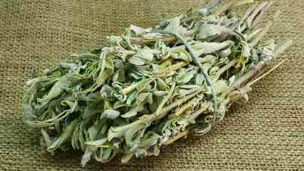 Evde adaçayı ve ebegümeci çayı nasıl hazırlanır? Adaçayı faydaları nelerdir?