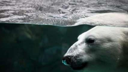 İklim değişikliği hayvanlarda hastalık riskini artırıyor