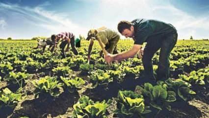 Pandemiye rağmen tarımda üretim arttı