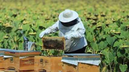 İpek böcekçiliği projelerine yüzde 100 hibe desteği verilecek