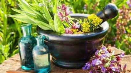 Soğuk havalarda direnç arttırıcı 10 bitki