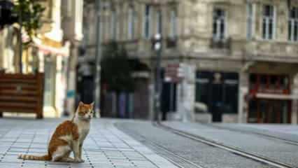 Yarın sokağa çıkma yasağı var mı? Hafta sonu sokağa çıkma yasağı ne zaman başlıyor?