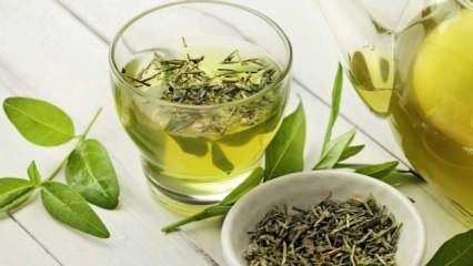 Yeşil çay zayıflatır mı? Ödem atmaya yardımcı yeşil çayın faydaları nelerdir?
