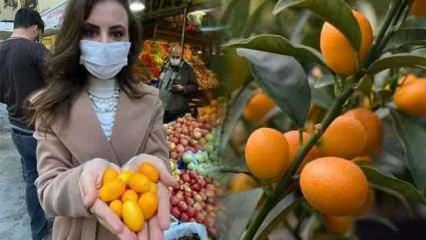 Altın portakal meyvesi kamkata talep patlaması! Fiyatı ise şaşırtıyor...