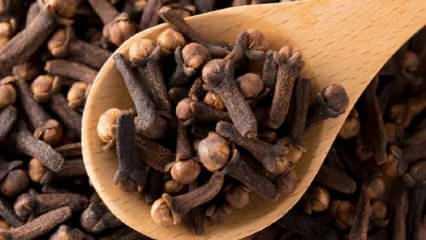 Karanfil çiğnemenin faydaları nelerdir? Ağız bakımında karanfil yağı nasıl kullanılır?