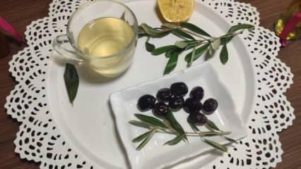 Koronavirüse karşı doğal antibiyotik; Zeytin yaprağı çayını günde 3 kez tüketin!