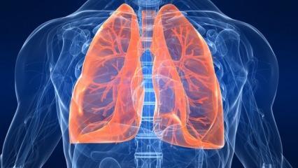 Akciğer sağlığını koruyan besinler nelerdir? Akciğer nikotinden nasıl temizlenir?
