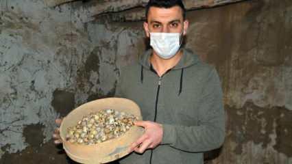 Prematüre kardeşine yumurtasını yedirmek için aldığı 8 bıldırcınla çiftlik kurdu