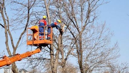 Kağıthane belediyesi ağaçların sağlığı için sahada!