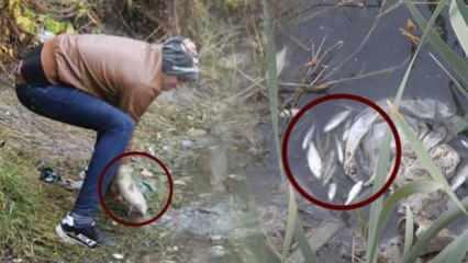 Amasyalı vatandaşlar uyarılara kulak asmadan Yeşilırmak'taki ölü balıklara hücum ettiler
