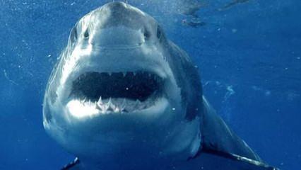 Dalgıcın köpek balığıyla burun buruna geldiği o korku dolu anlar!