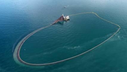 Karadenizde bir ilk! Balıklar ters yöne göç ediyor