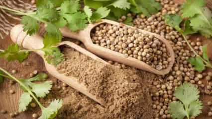 Kişniş tohumunun faydaları nelerdir? Ağız içi yaraları için kişniş yağı işe yarar mı?