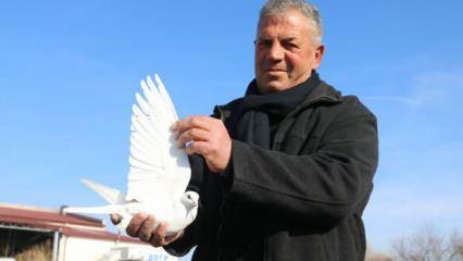 Sivas'ta müdürlüğü bırakıp güvercin beslemeye başladı! Kuşları 100 bin liraya bile satmıyor