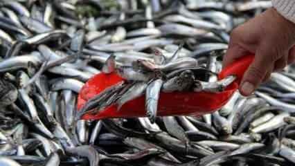 Bakanlık duyurdu: Hamside av yasağı uzatıldı