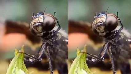 30.000 ayrı göz peteği olan Yusufçuk'un gözlerindeki damlaları sildiği an!