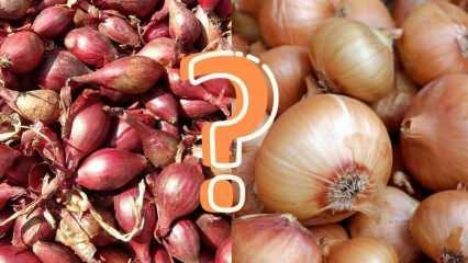 Arpacık soğan yerine kuru soğan kullanılabilir mi? İşte cevabı