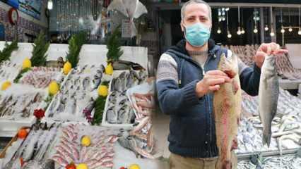 Balığın sahte olduğu nasıl anlaşılır? Balığı ağır ve parlak göstermek için yapılan hileler