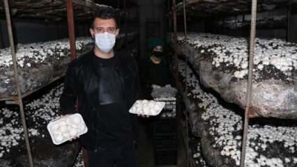Doğu Anadolu'nun en büyük tesisinde aylık 20 ton mantar üretiyorlar