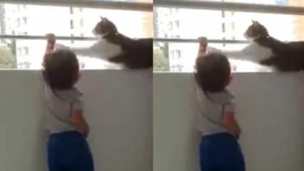 Minik dostunu koruyan kedi!
