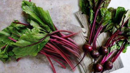 Ispanağa rakip sebze! Demir deposu pancar yaprağı pek çok hastalığa şifa oluyor
