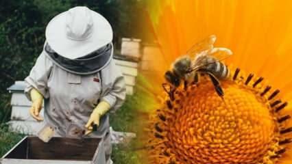 Koronaya iyi geldiğini düşündükleri için arıların iğnesini vurduruyorlar!