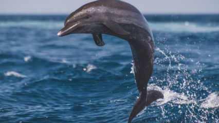 Rüyada yunus balığı görmek neye işaret? Rüyada yunus balığı sevmek nasıl tabirlenir?