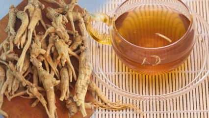Ginsengin faydaları nelerdir? Ginsengi nasıl tüketilir? Ginsengi çayı ne işe yarar?