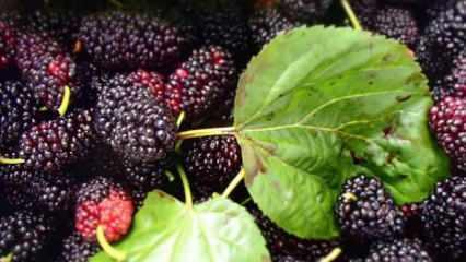 Karadut pekmezinin faydaları ve besin değerleri nelerdir? Dut pekmezi öksürüğü iyi gelir mi?