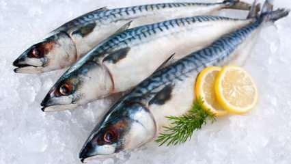 Uskumru balığı en kolay nasıl ayıklanır? En pratik şekilde uskumru ayıklama yöntemi