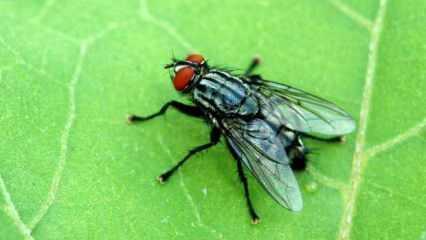 Rüyada kara sinek sürüsü görmek ne anlama gelir? Rüyada kara sinek yemek neye işaret?